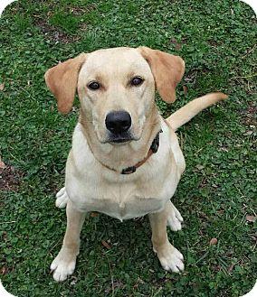 Labrador Retriever Mix Dog for adoption in New Oxford, Pennsylvania - Hetti
