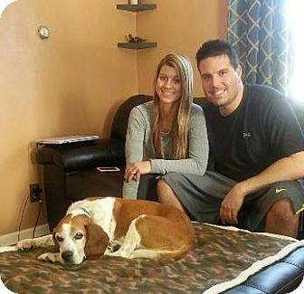 Beagle Dog for adoption in Kenmore, New York - Jake