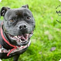 Adopt A Pet :: DeeDee - Portland, OR
