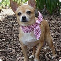 Adopt A Pet :: Daffodil - Rancho Palos Verdes, CA