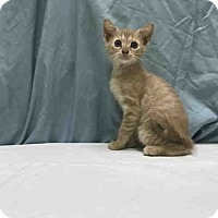 Adopt A Pet :: Sven - St. Cloud, FL