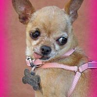 Adopt A Pet :: Muffie - Anaheim Hills, CA
