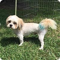 Adopt A Pet :: Benny - San Leon, TX