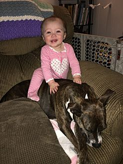 Boxer/Bull Terrier Mix Dog for adoption in San Diego, California - Lilly