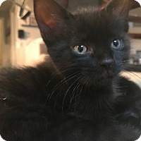 Adopt A Pet :: Truffle - Montreal, QC