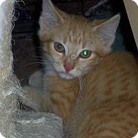 Adopt A Pet :: ARCHER - Medford, WI