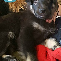 Adopt A Pet :: Maybell - Kimberton, PA