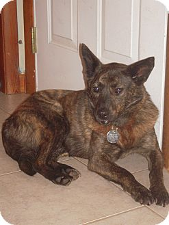 Shepherd (Unknown Type) Mix Dog for adoption in Rochester/Buffalo, New York - Sienna