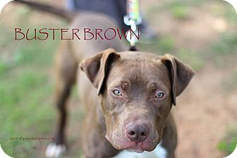 Pit Bull Terrier Mix Puppy for adoption in Alpharetta, Georgia - Buster Brown