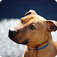 Adopt A Pet :: Gulliver - Port Washington, NY