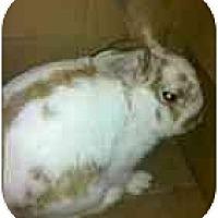 Adopt A Pet :: Parker - Maple Shade, NJ