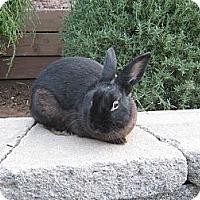 Adopt A Pet :: Angela - Santee, CA