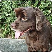 Adopt A Pet :: Addie - Sugarland, TX
