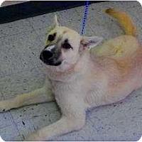 Adopt A Pet :: Antonia - FOSTER NEEDED - Seattle, WA