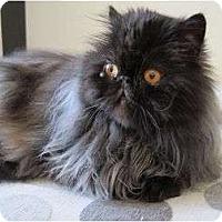 Adopt A Pet :: Lucio - Beverly Hills, CA