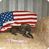Adopt A Pet :: Cooper - Arkadelphia, AR