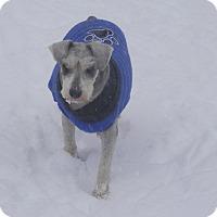 Adopt A Pet :: Arizona - Clarksville, TN