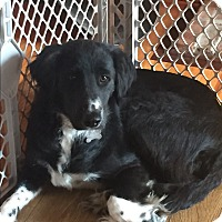 Adopt A Pet :: Abbie - WAterford, WI