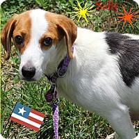 Adopt A Pet :: Sally - Fredericksburg, VA