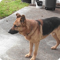 Adopt A Pet :: Judge - Adoption Pending - Houston, TX