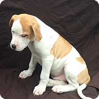 Adopt A Pet :: Gryffin - East Sparta, OH