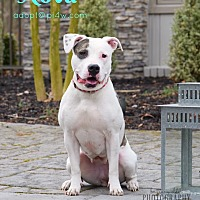 Adopt A Pet :: Promise/Nova - Cherry Hill, NJ