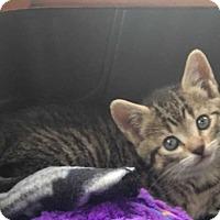 Adopt A Pet :: Blynkyn - Mount Laurel, NJ