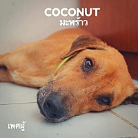 Adopt A Pet :: Coconut - Vancouver, BC