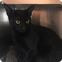 Adopt A Pet :: Corey - Mission Viejo, CA