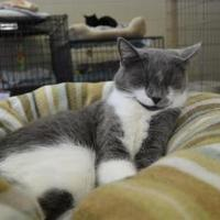 Adopt A Pet :: Janey - Erie, PA