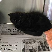 Adopt A Pet :: Disco - Colonial Heights, VA