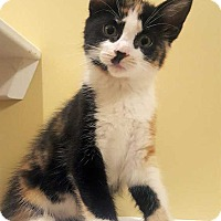 Adopt A Pet :: Glory - Accident, MD