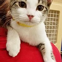 Adopt A Pet :: Tumbleweed - St. Louis, MO