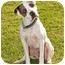 Photo 2 - Pointer/Boxer Mix Dog for adoption in Marina del Rey, California - Benny