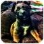 Photo 1 - Labrador Retriever Mix Puppy for adoption in Wasilla, Alaska - Coda