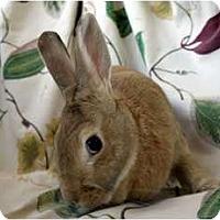 Adopt A Pet :: Honey Bunny - Martinez, CA