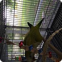 Adopt A Pet :: Cinnamon - Punta Gorda, FL