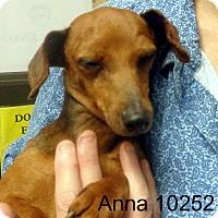 Adopt A Pet :: Anna - Greencastle, NC