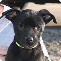 Adopt A Pet :: Skylar - PENDING, in Maine - kennebunkport, ME