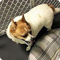 Adopt A Pet :: Princess - Tavares, FL