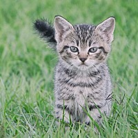 Adopt A Pet :: Firefly - Webster, TX