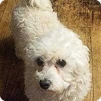 Adopt A Pet :: Page - Detroit, MI