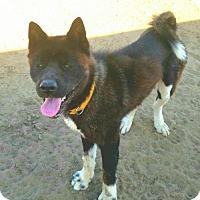 Adopt A Pet :: Anna - Romoland, CA