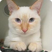 Adopt A Pet :: Jose Flame Point - Woodland Park, NJ