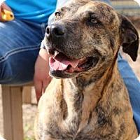 Adopt A Pet :: Bella - Bryan, TX
