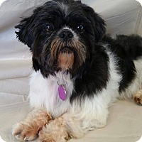 Adopt A Pet :: Samuel Turner - Urbana, OH