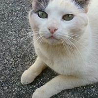Adopt A Pet :: Docker *Courtesy Post* - Redding, CA