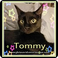 Adopt A Pet :: Tommy Pickles - Blaine, MN