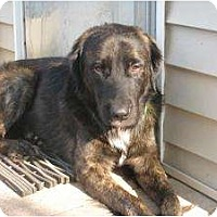 Adopt A Pet :: Bear - Warren, NJ