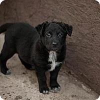Adopt A Pet :: Ivy - Saskatoon, SK